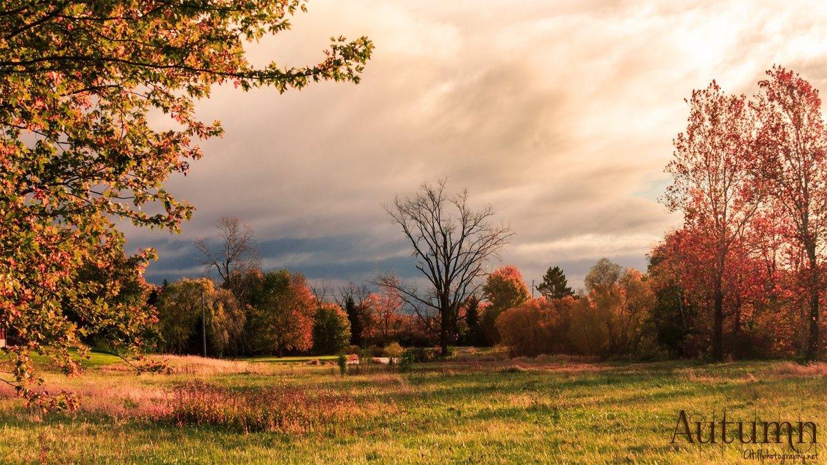 Картинки осенние поляны
