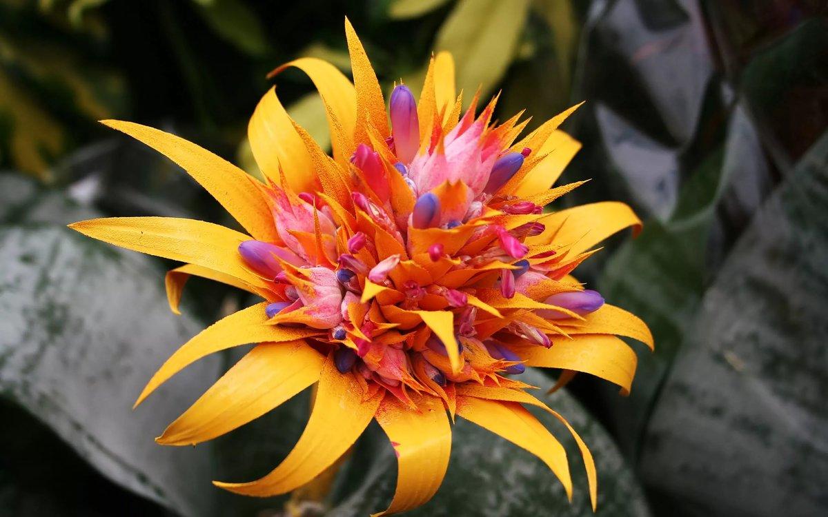 фото экзотических цветов в хорошем качестве совет