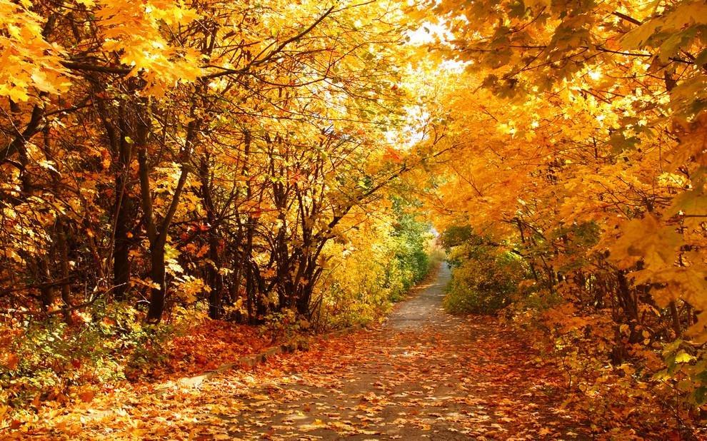 Про, картинки золотая осень фото