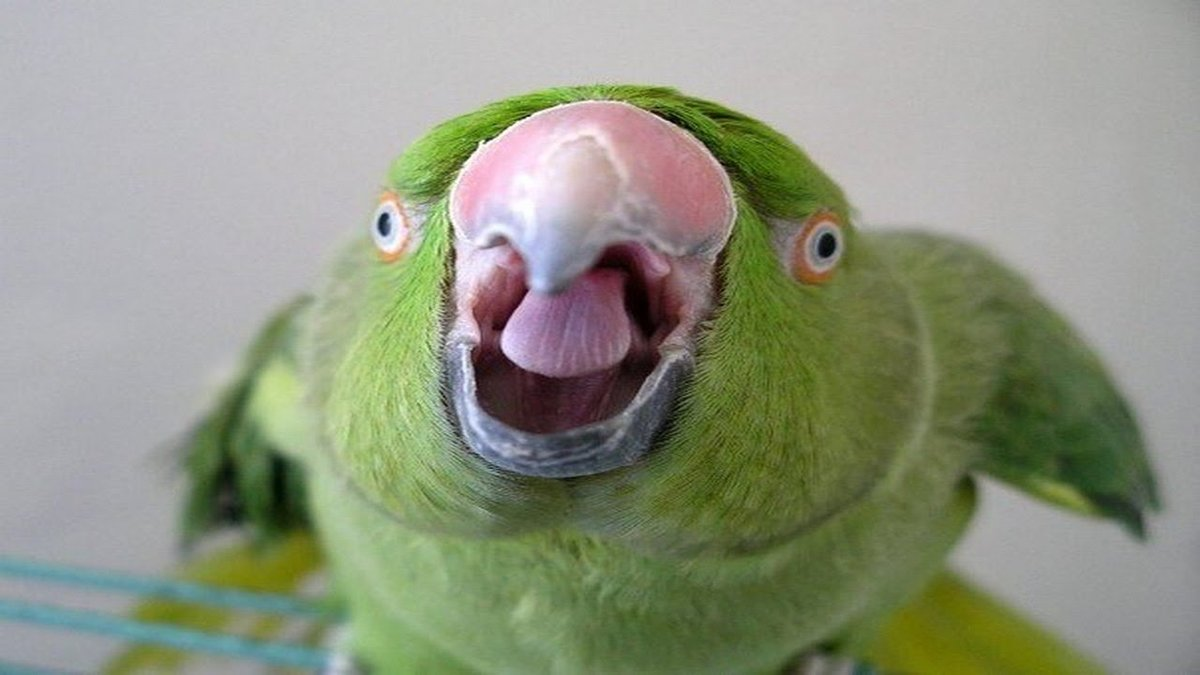 Попугай прикол картинки