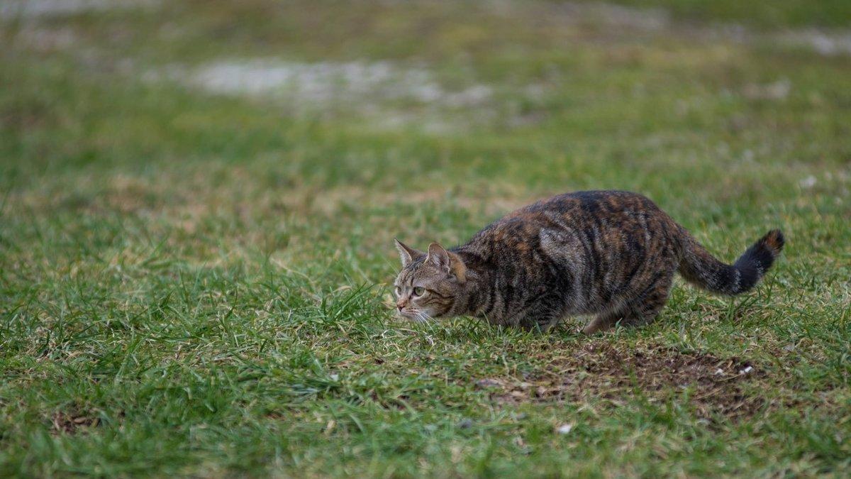 Коты на охоте фото