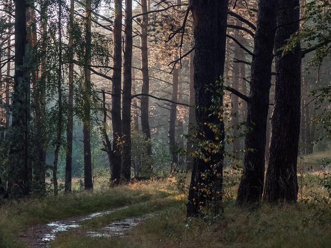 фото в лесу после дождя что мне нравится