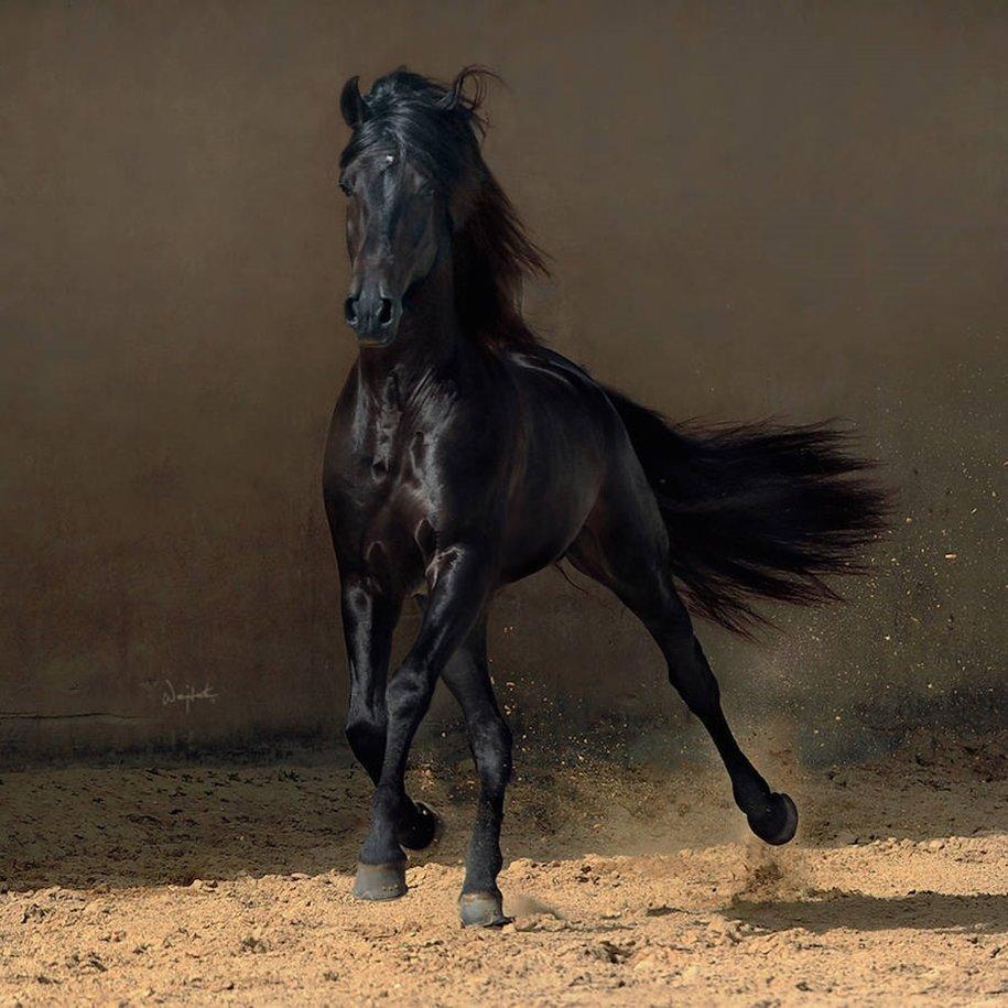 "Красота и грация лошадей в Ñ""оÑ'ограÑ""Ð¸ÑÑ Ð'ойÑ'ека Квиатковски """