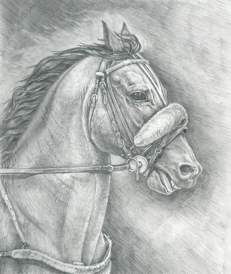 своими картинки простого рисунка лошади белого цвета