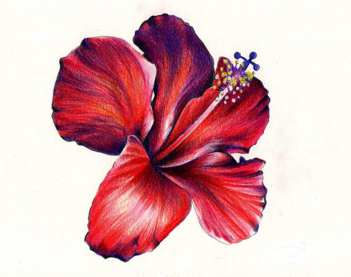 Картинки цветок красивые рисунок, ужин