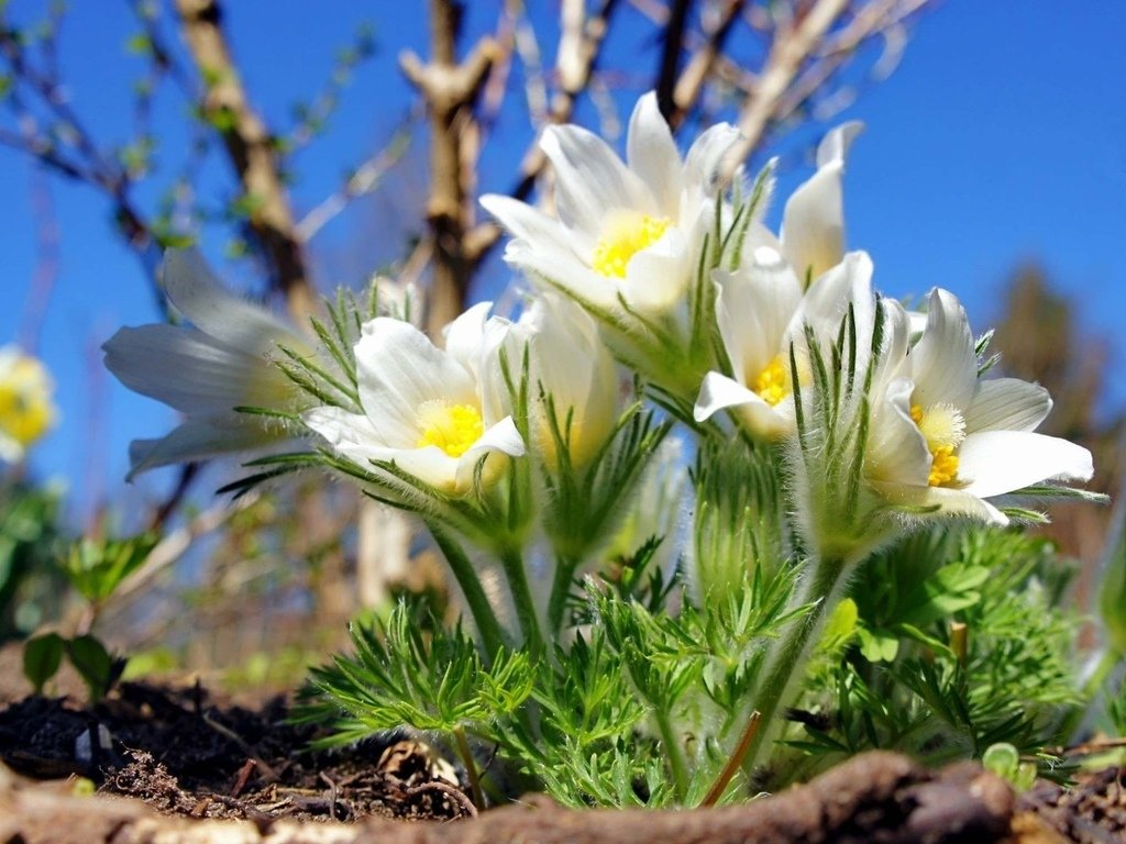 Картинки о природе весна красивые, классных открыток