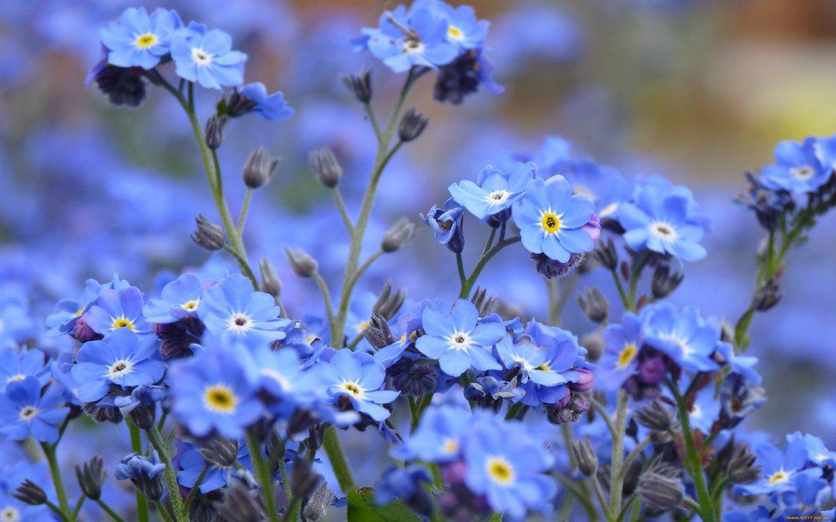 Фото полевых цветов в хорошем качестве