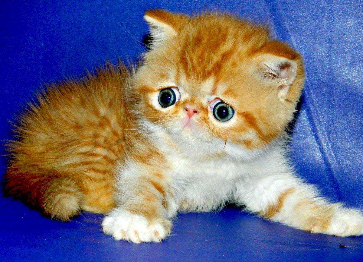 котята экзотические картинки гриб