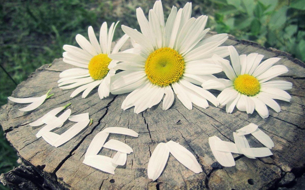 Прикольная картинка про цветы