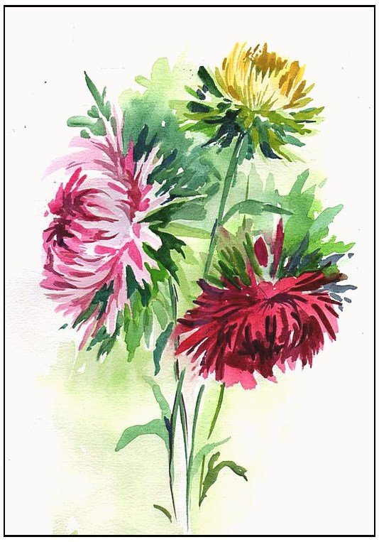 Картинка цветок астра нарисованная, рамку для