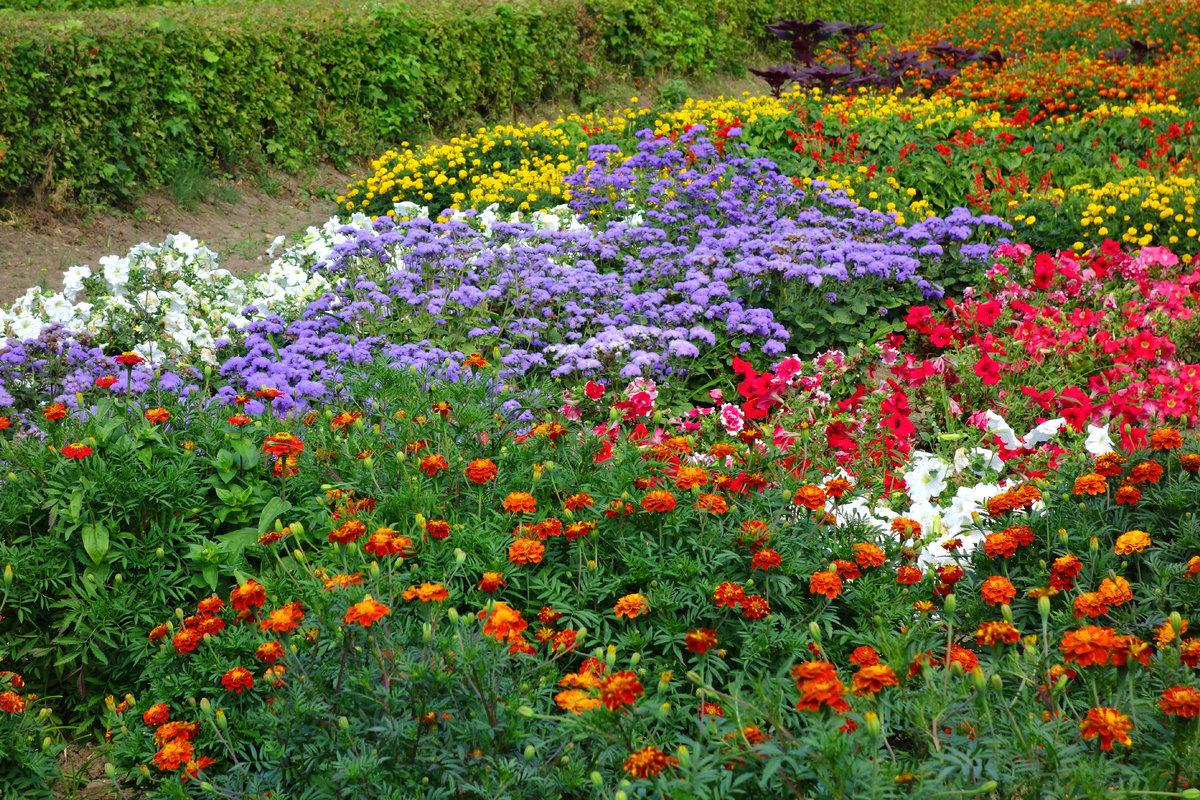 цветы на клумбе цветущие фото словам