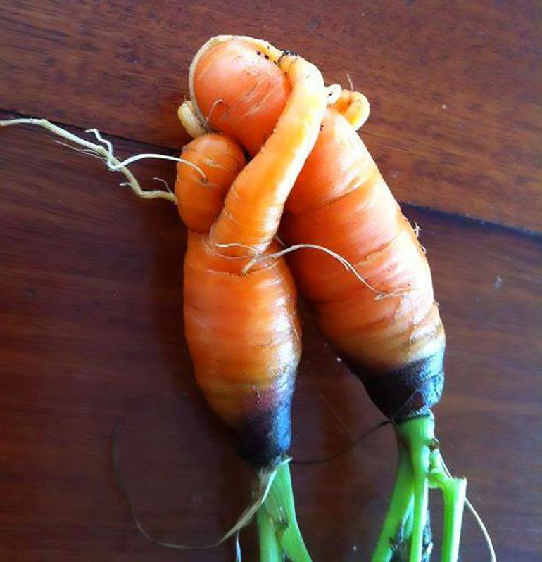 Морковки прикольные картинки, слова девушке