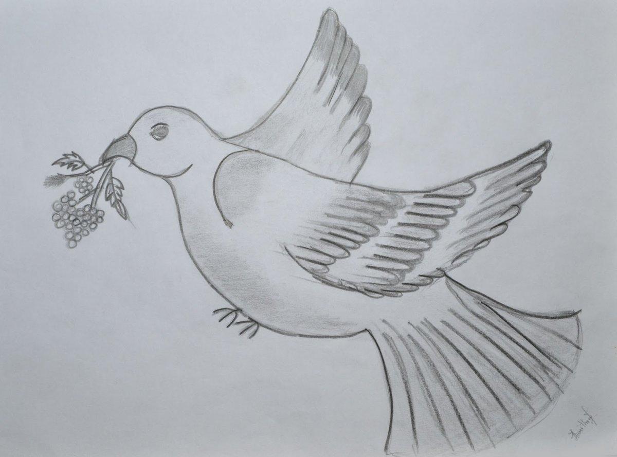 Рисунки голубей карандашом