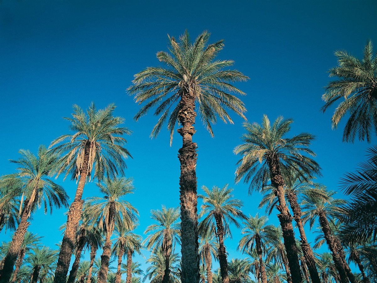Пальмы открытки