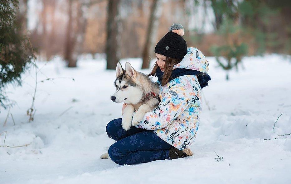 зимняя фотосессия с маламутами идеи фото разборная, что позволяет