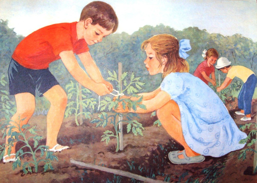 Труд взрослых в огороде картинки фикуса