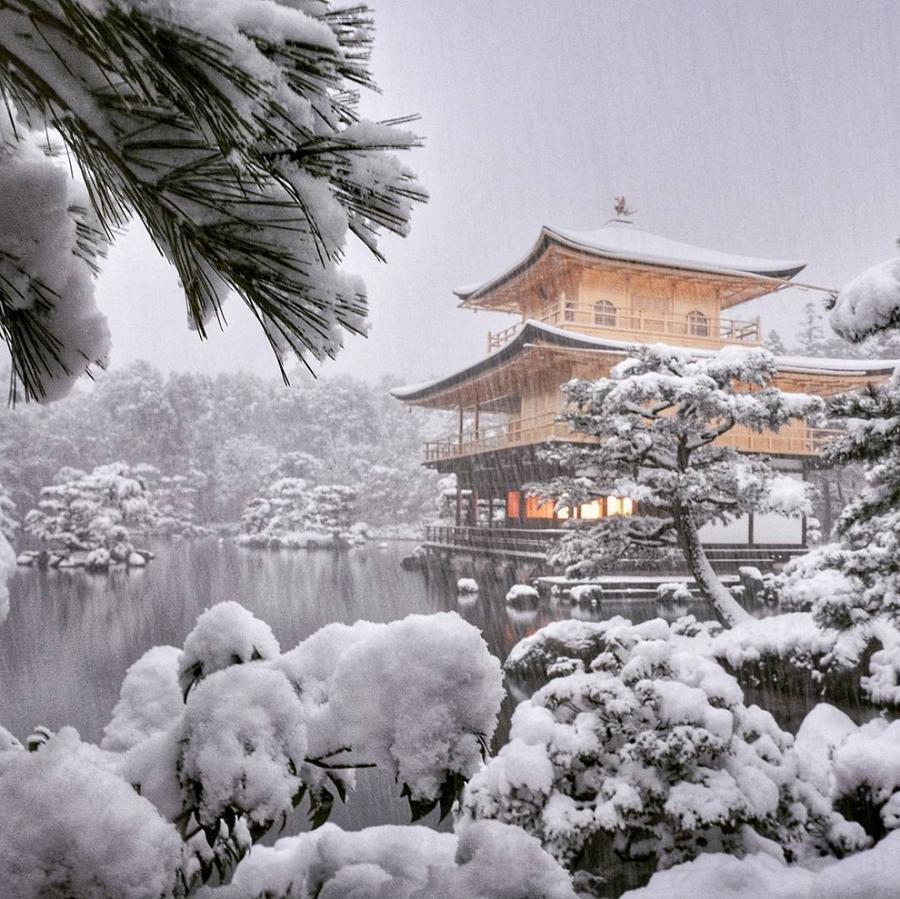 крупноплодные, мне картинки зимняя йокогама стал хорошим примером