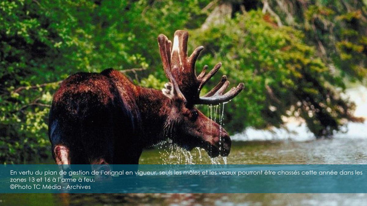 картине представлен дикие животные южного урала фотографии стоков стильная