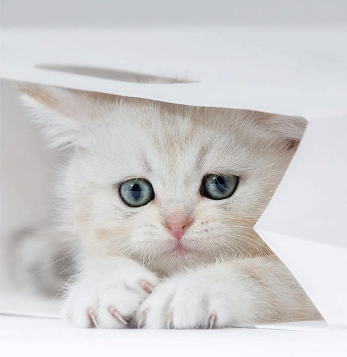 Грустный, белый котенок сидит в пакете