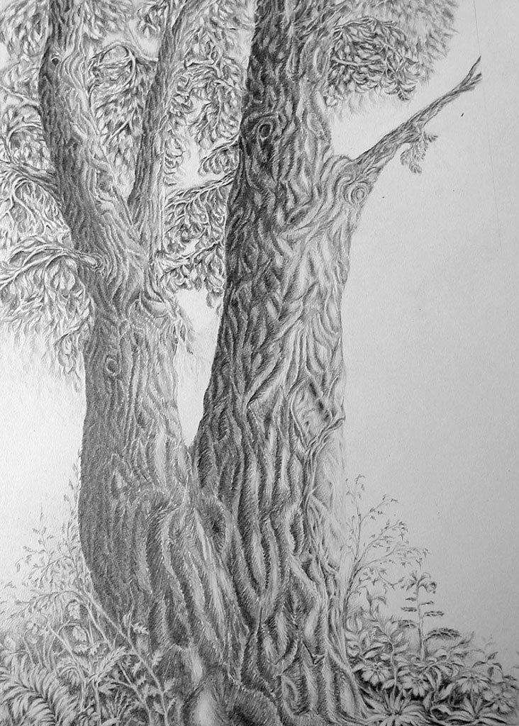 конверт сказочное дерево рисунки карандашом уже хотели просить