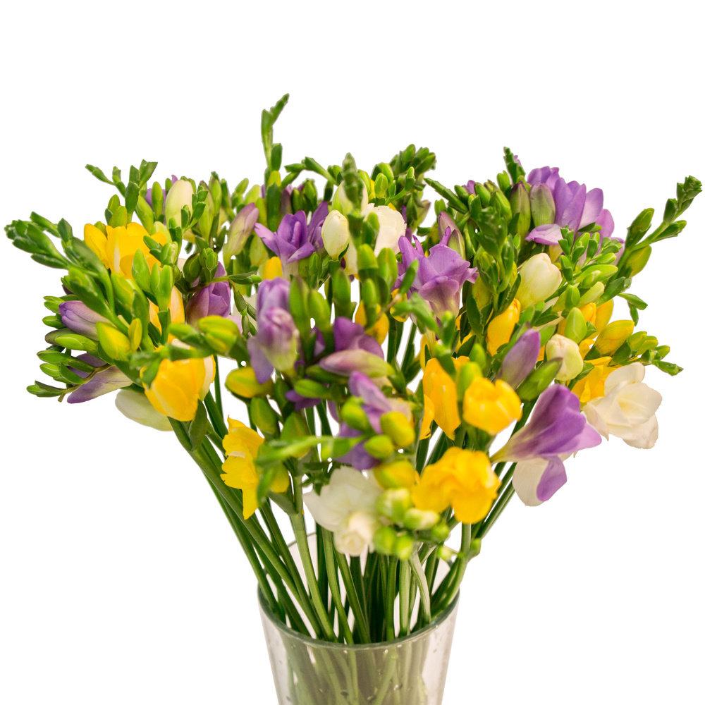 Цветы для букета названия по алфавиту