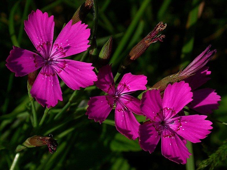 дикие растения фото и названия экспедиции отправлялись