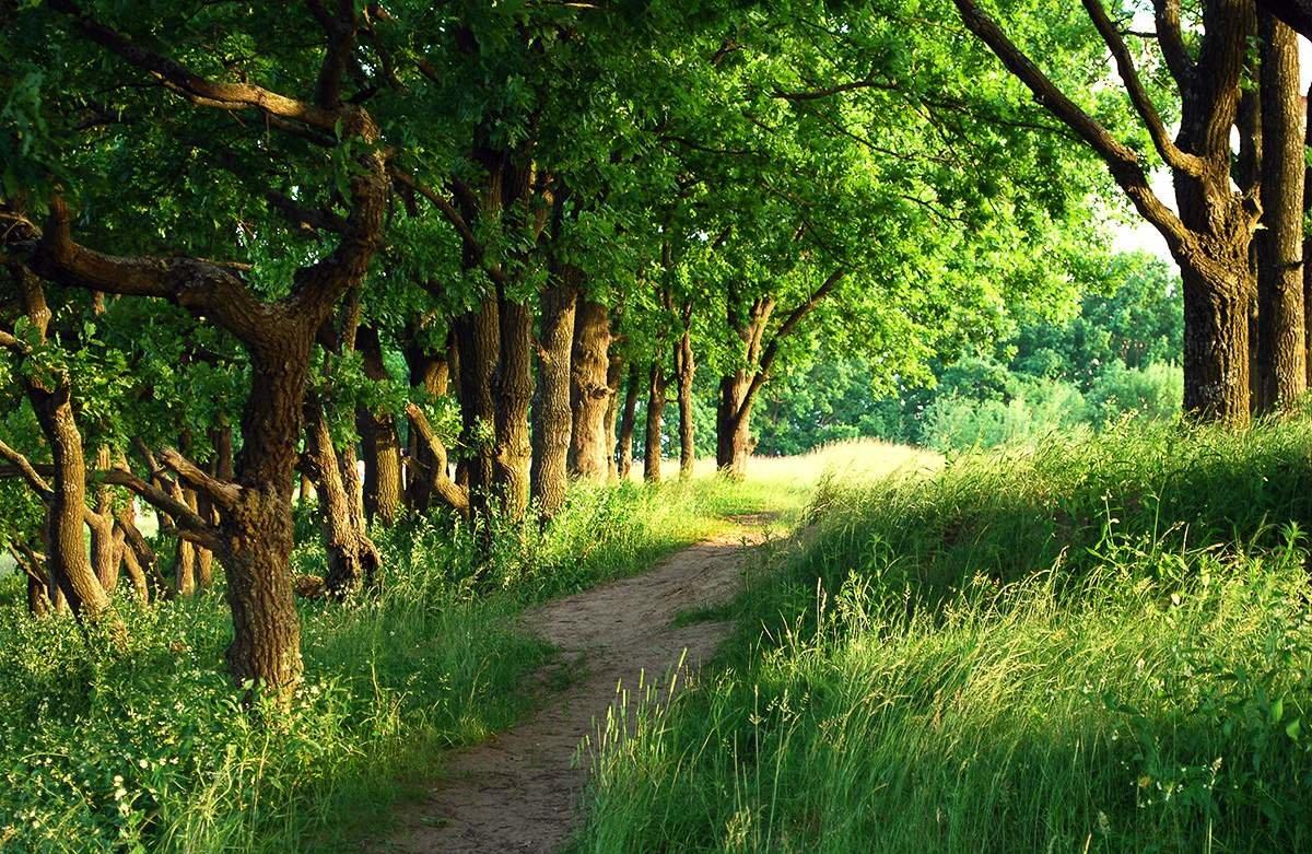 Растения леса картинки и названия