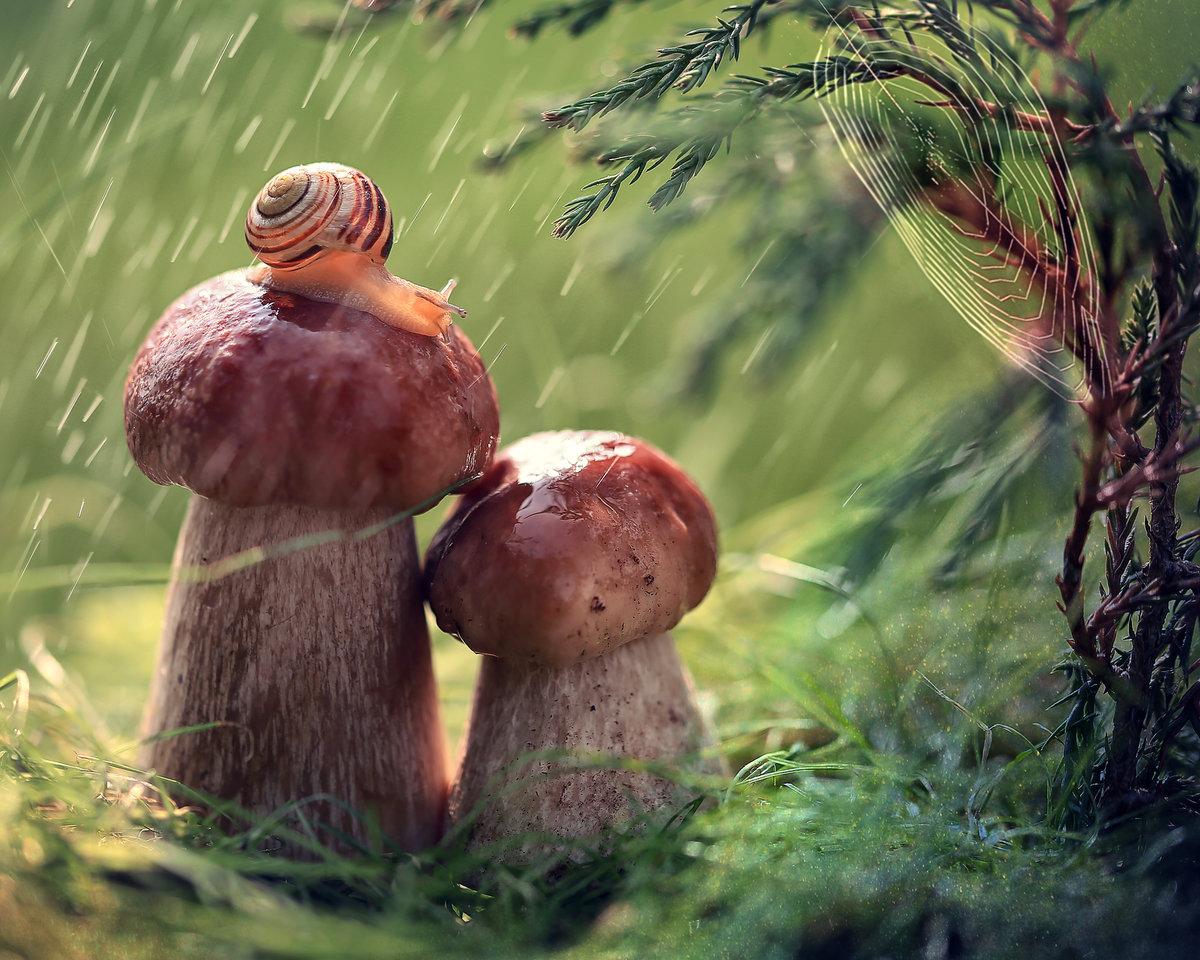 Космонавтики, картинки анимашки грибной дождь
