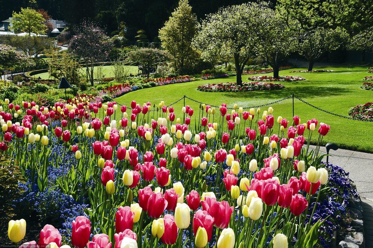 Цветы сады картинки