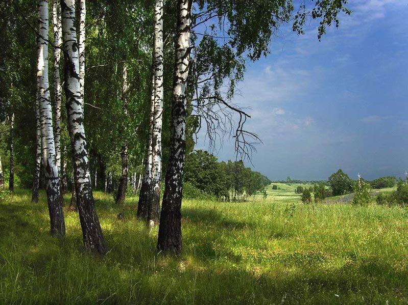 это удивительно, русский лес летом фото эти годы