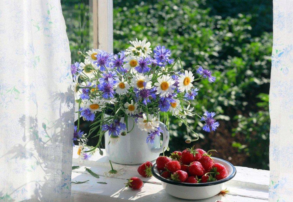 Открытки цветы на подоконнике, лучи