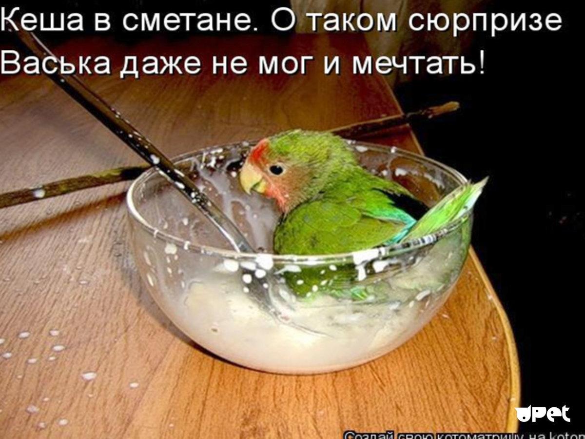 Рисунки, картинки про попугаев смешные с надписями