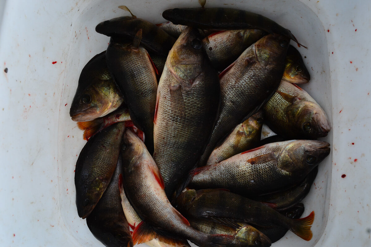Отдых и рыбалка на Рыбинском водохранилище