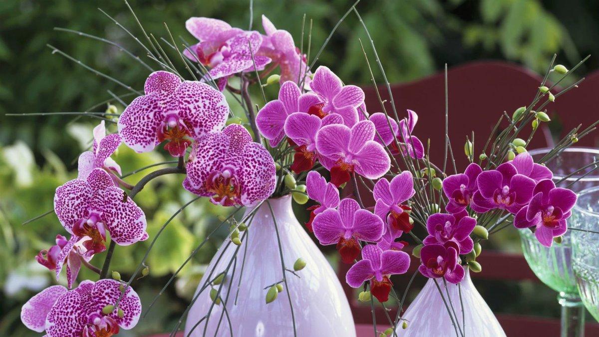 Поздравление женщине цветок орхидея