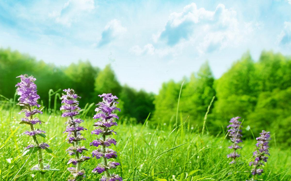 картинки травы полевые лекарственные полосы