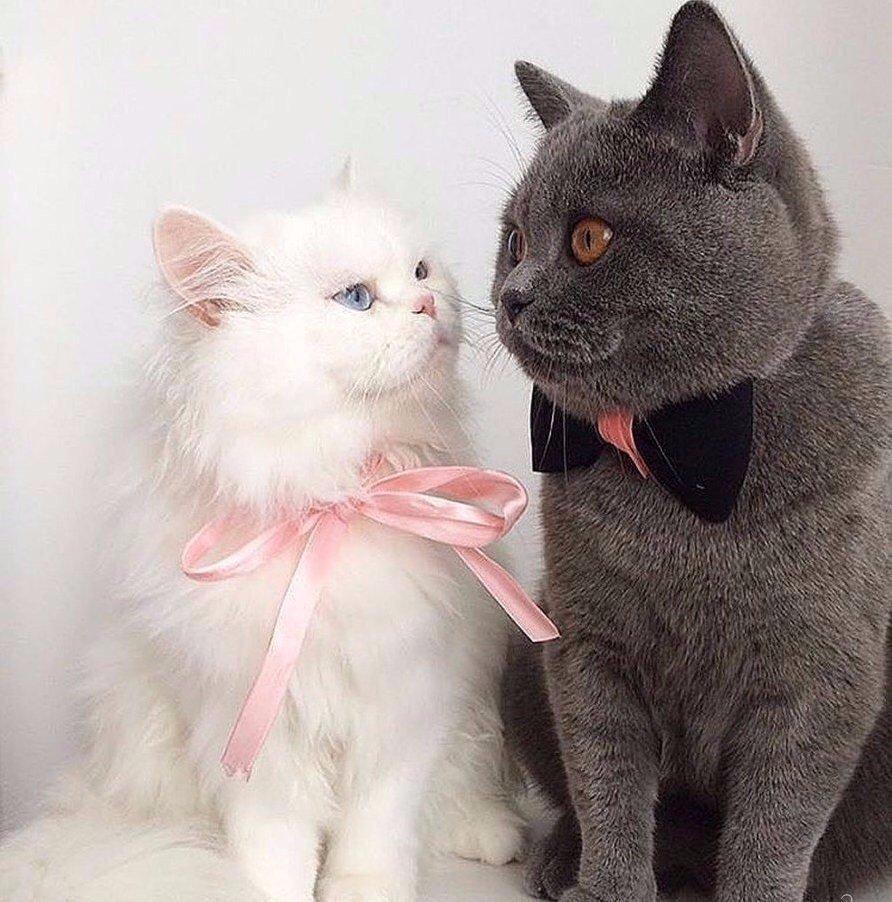 выставляют картинки кошки пары ботильоны подходят