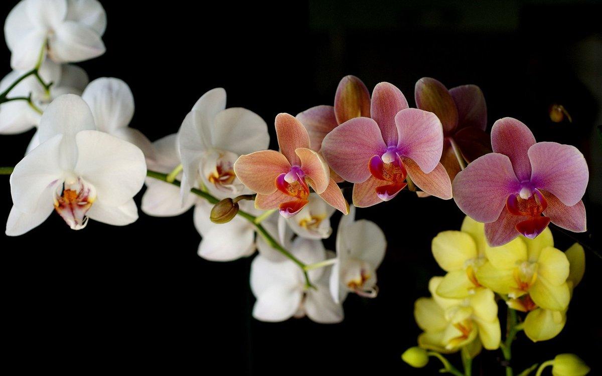 Днем, картинки орхидеи на рабочий стол красивые большие на весь экран