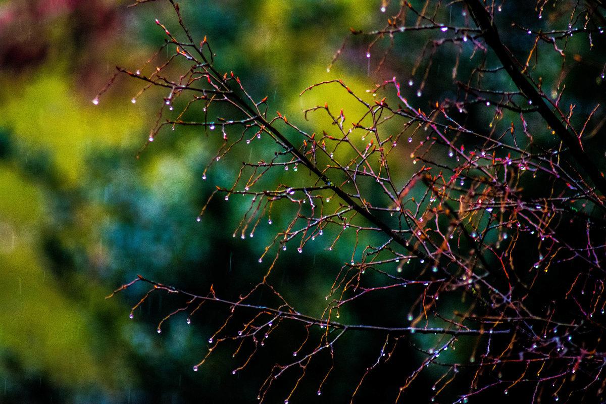 дождливое весеннее утро фото находятся