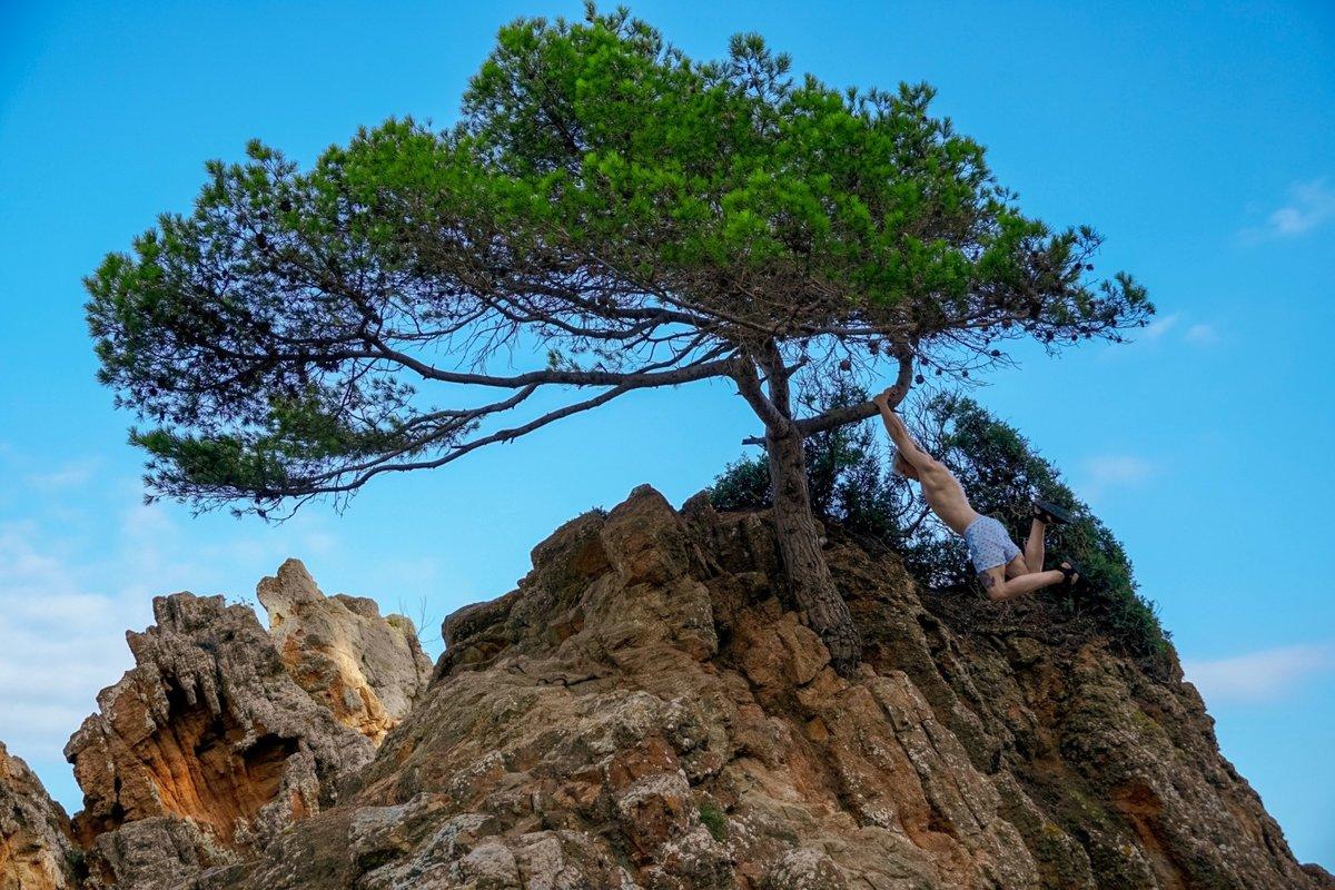 дерево в скале картинки брус гнил, его