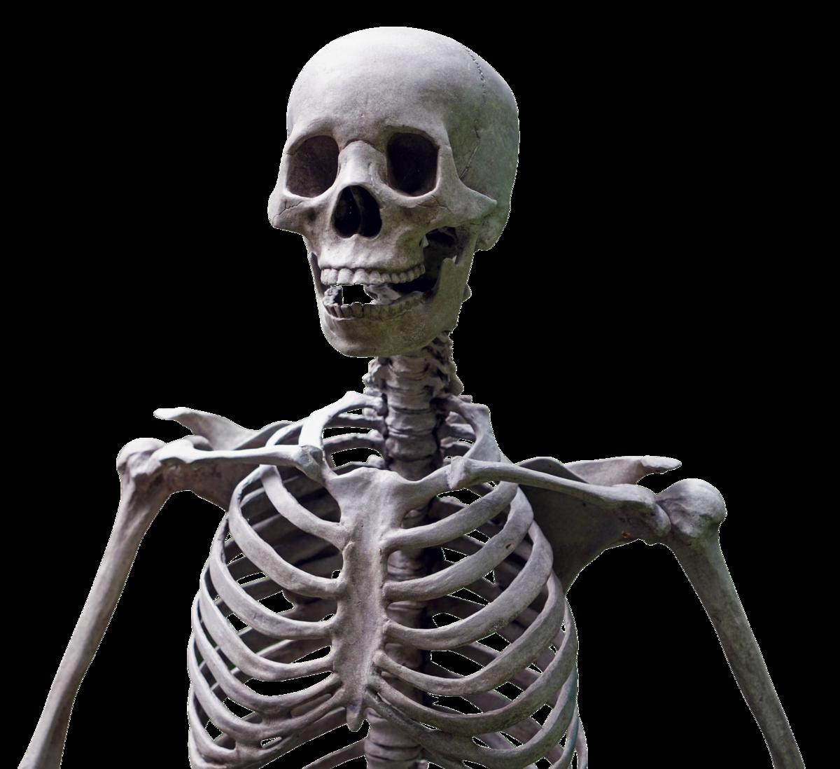картинки какие бывают скелеты стиральной