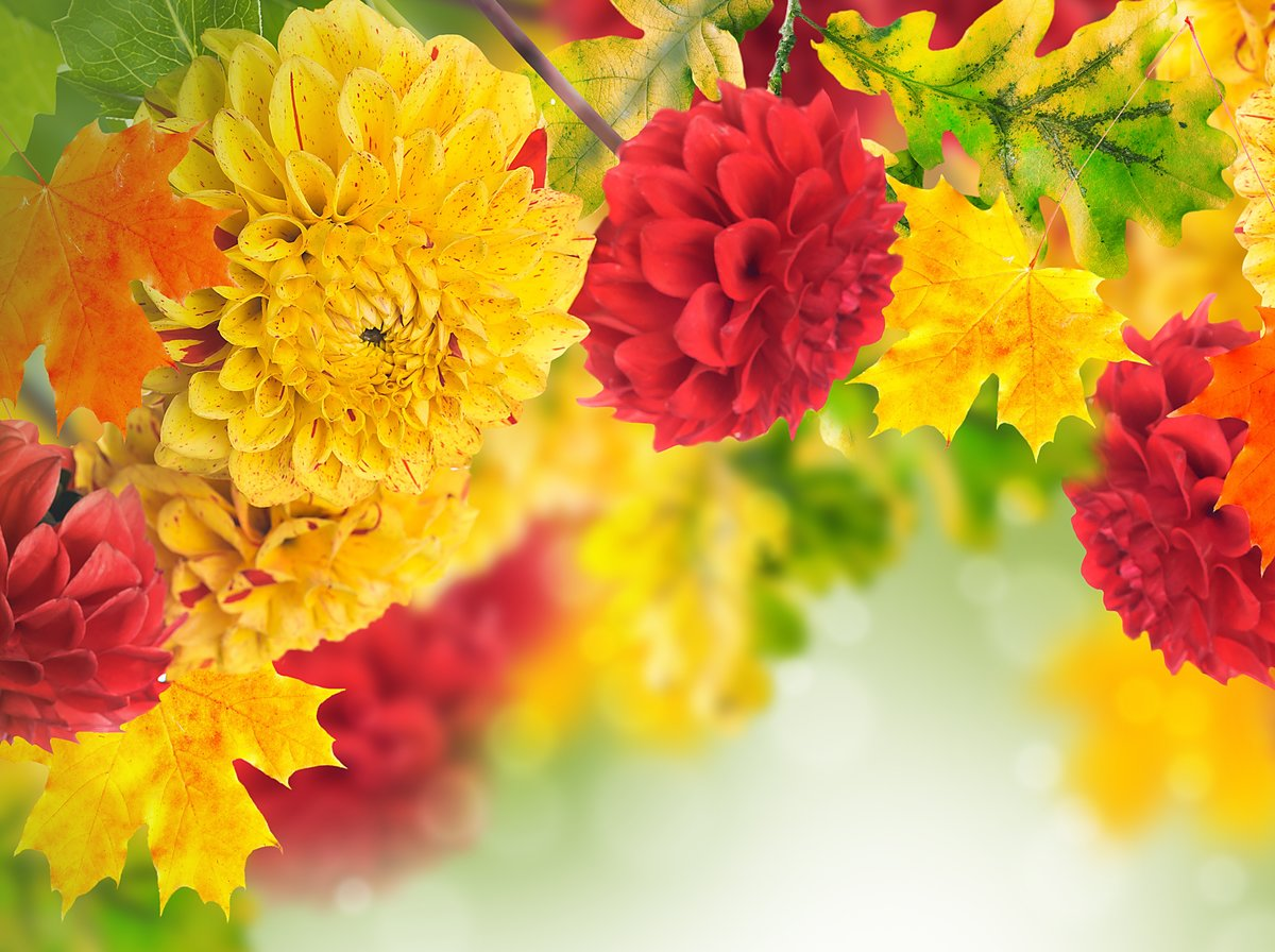 Картинки осень цветы золотая, картинки ответ