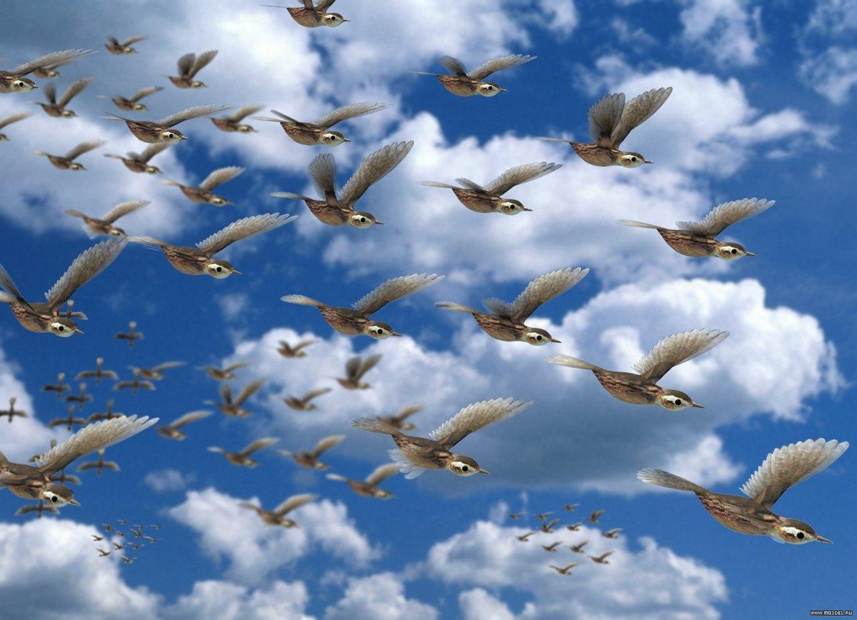 Картинки анимация птицы улетают