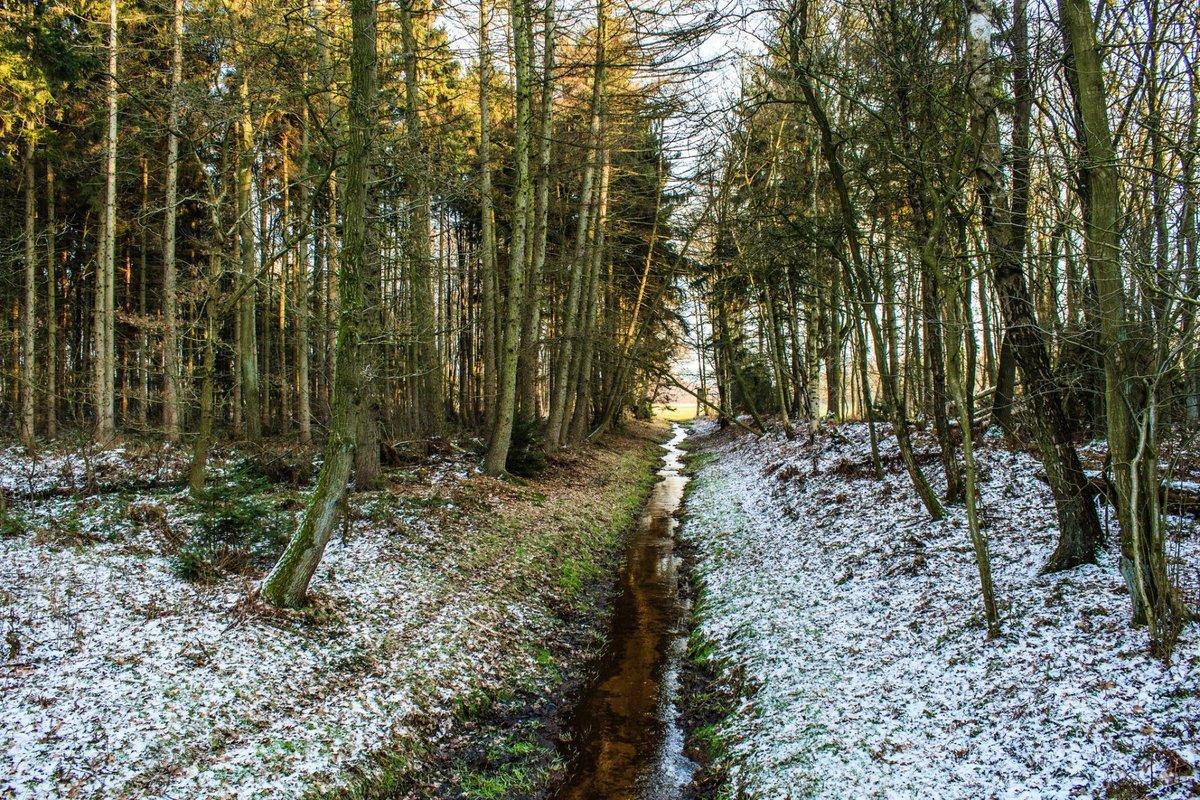 фотографии весеннего леса сказать