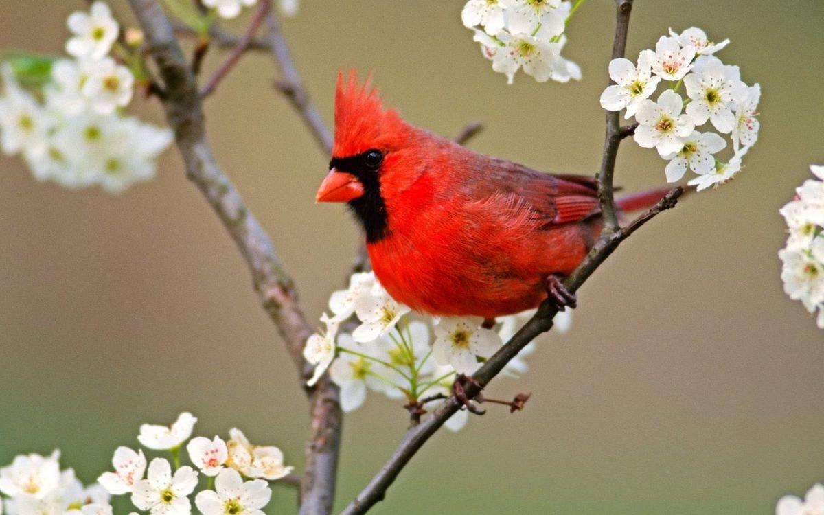 Картинки, картинки о птицах