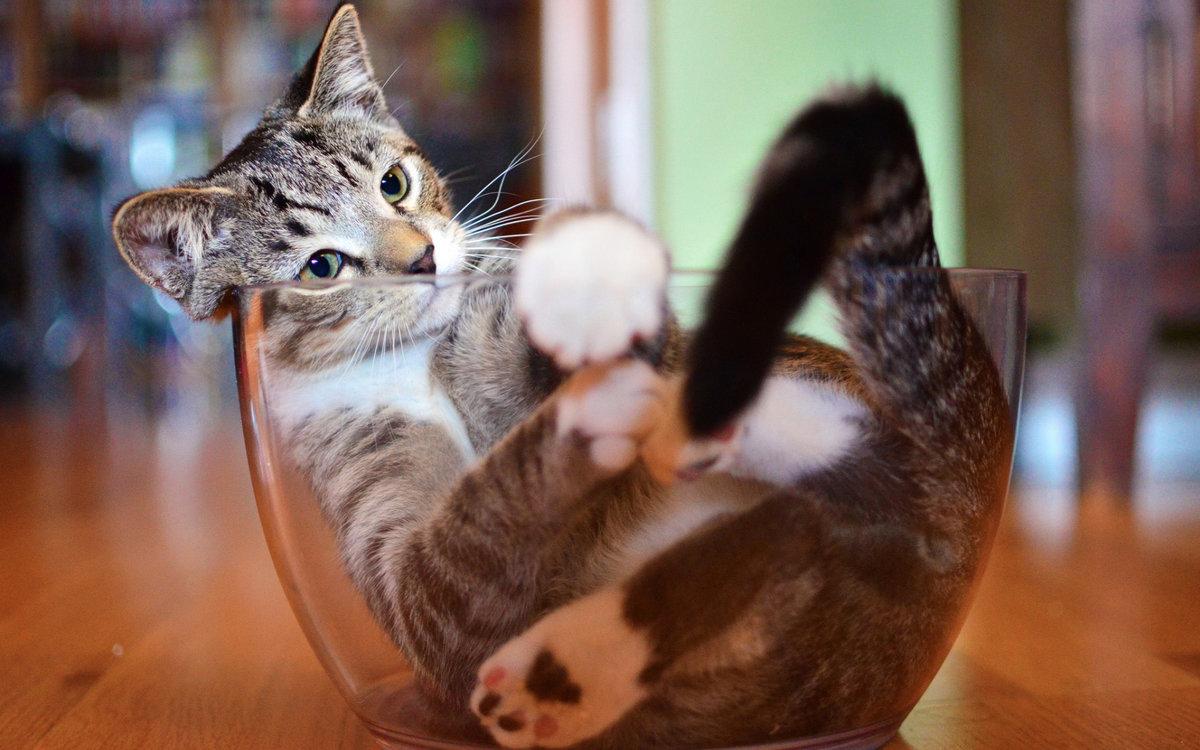 Открытка, прикольная картинка на кошку