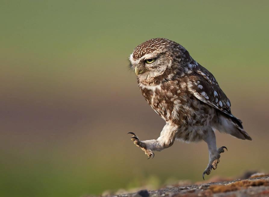 Прикольные картинки с надписями с совами