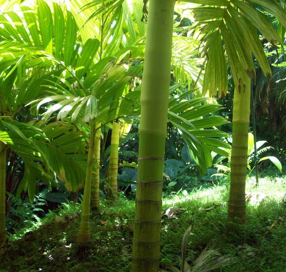 пальмы название с картинками