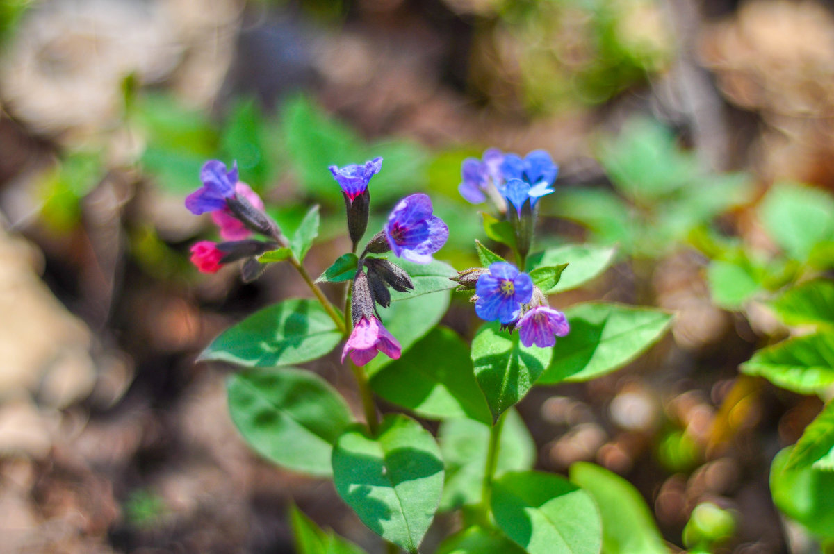 сети весенние лесные цветы фото и названия следующих