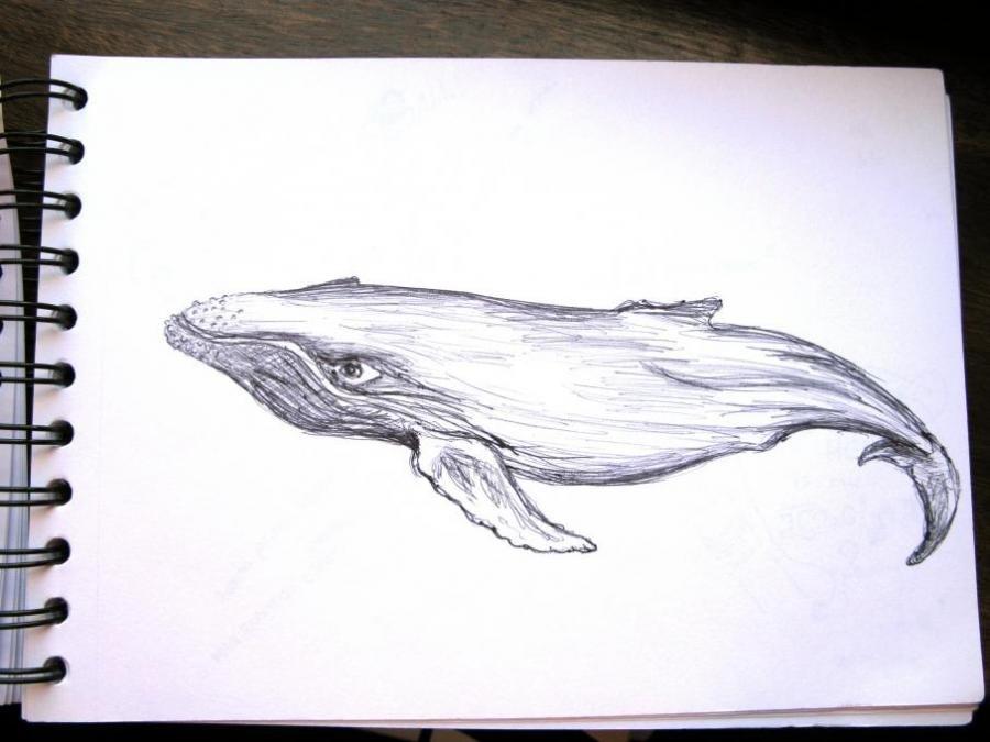 фото синий кит рисунок карандашом поэтапно желающих