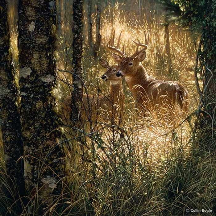 Лесные животные фотообои